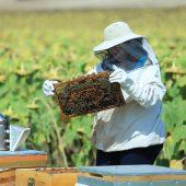 السعودية ثالث أكبر مستورد للعسل التركي بالربع الأول من 2019
